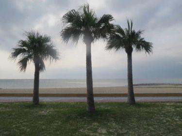 明るいポップサウンド、南国風の音楽素材「ココナッツと青い海」