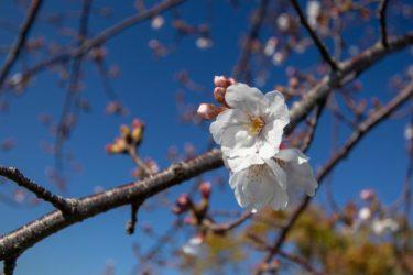 エレピの音色が美しいしっとりとした音楽素材「春を待つ花」