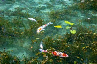幻想的でファンタジーな雰囲気のアンビエントサウンド「モネの池」