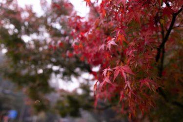 深まっていく秋を想像するR &B風の音楽素材「紅色の風」