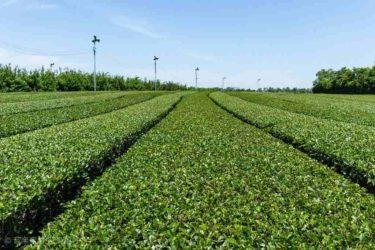 日本の茶畑を想像する和風テイストの音楽素材「Green Tea」